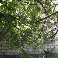 """Дача СОТ """"Ягодка"""" - 12"""
