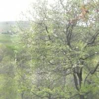 Дом в с.Варваровка - 9